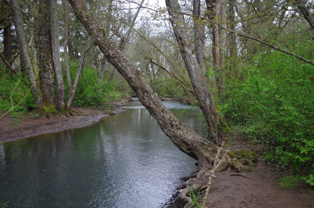 File:Pringle Creek, Deepwood Estate, Salem.jpg
