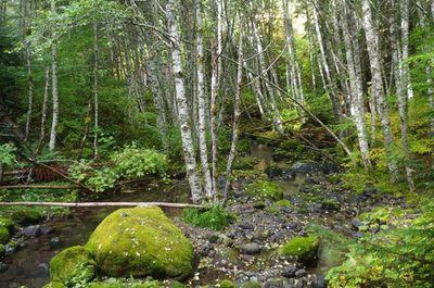Betty Creek Crossing - Hiking in Portland, Oregon and Washington