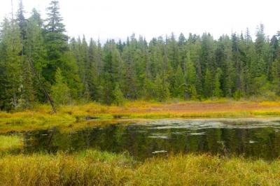 enid lake via pioneer bridle trail hike hiking in portland