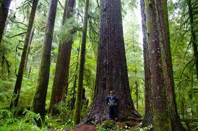 Valley Of The Giants Loop Hike Hiking In Portland