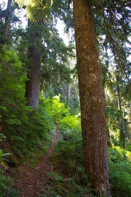 Bagby Hot Springs-Silver King Lake Trail Junction - Hiking in
