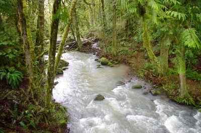 Cazadero Trail Hike - Hiking in Portland, Oregon and Washington