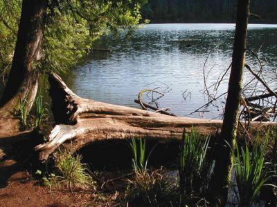 Battle Ground Lake Loop Hike Hiking In Portland Oregon