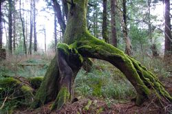 Stride Spruce Preserve Cannon Beach Nature Trail Bobcat