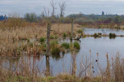 Fernhill Wetlands Loop Hike Hiking In Portland Oregon And
