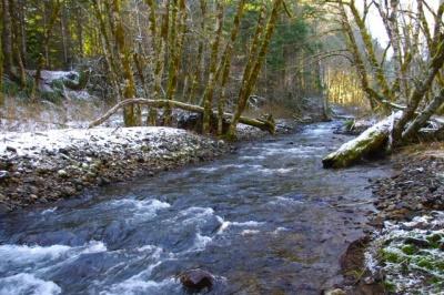 gales creek oregon map North Gales Creek Trail Hike Hiking In Portland Oregon And gales creek oregon map