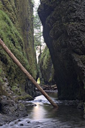 oneonta gorge hike hiking in portland oregon and washington. Black Bedroom Furniture Sets. Home Design Ideas
