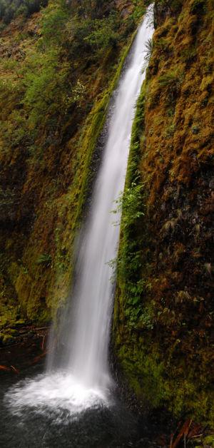 Gorton Creek Falls Hike Hiking In Portland Oregon And