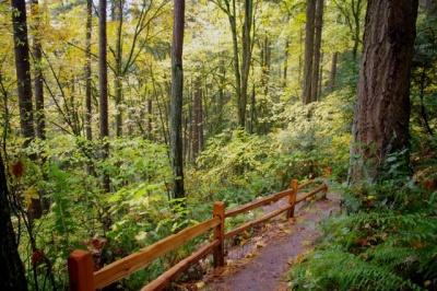 Marquam Nature Park Loop Hike - Hiking in Portland, Oregon and Washington
