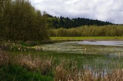 Finley Refuge Loop Hike - Hiking in Portland, Oregon and ...