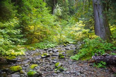Hot Springs Fork Upper Crossing - Hiking in Portland, Oregon and