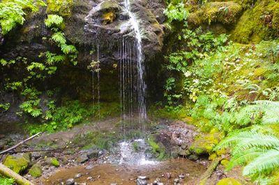 Shower Creek Falls - Hiking in Portland, Oregon and Washington