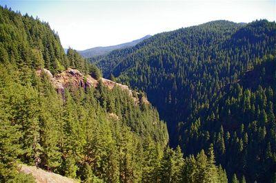 Green Canyon Salmon River Loop Hike Hiking In Portland Oregon And