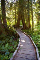 Trillium Lake Loop Hike Hiking In Portland Oregon And