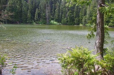 Black Lake (Waucoma Ridge) - Hiking in Portland, Oregon and