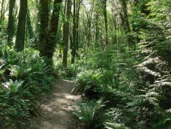 Marquam Nature Park To Council Crest