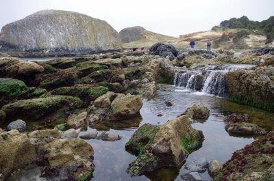 Ona Beach To Seal Rock Hike Hiking In